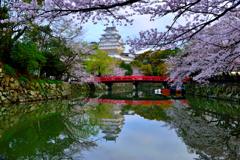 姫路城 桜