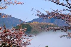 竹田城跡 桜-Ⅱ