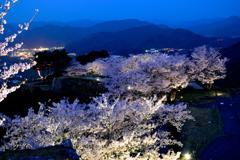 竹田城跡 桜ライトアップ