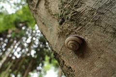 樹皮のカタツムリ
