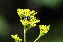 青い蜂 3