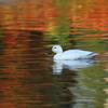 秋色の水面 7