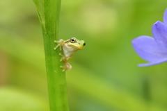 水葵ケロ 2