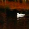 秋色の水面 6
