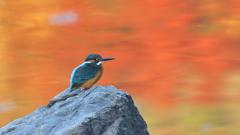 秋色の水面 9