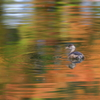 秋色の水面 5