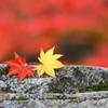 秋を楽しむ 2