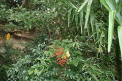赤と緑のコントラスト(大橋直久)
