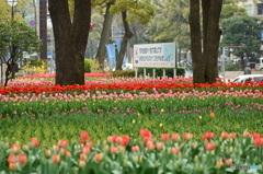 横浜公園の春