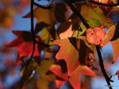 秋色と青空