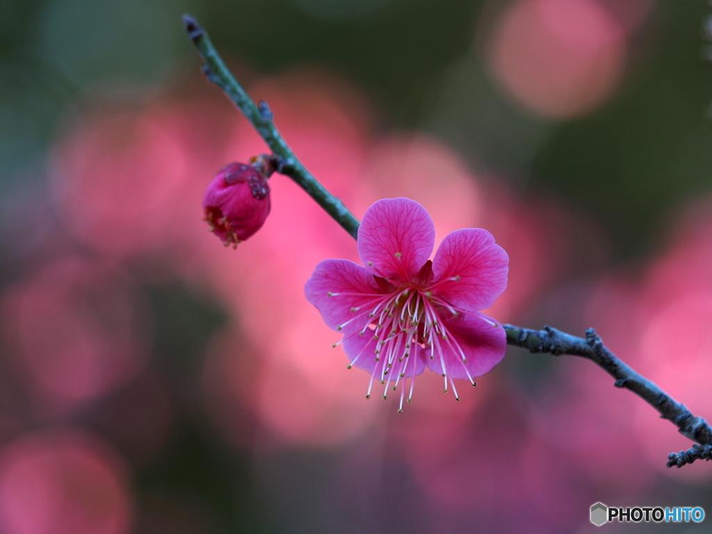 咲かせて 咲かせて