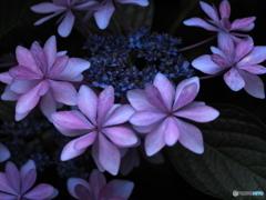 Rainy purple