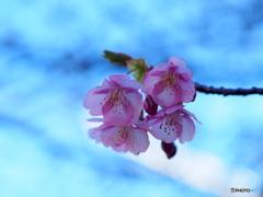 春へ 春へと