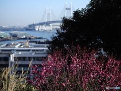 春めく横浜