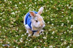 Rabbit on  clover