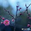 近づく春・・・