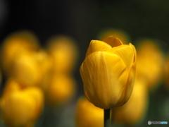 見えない春