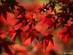 燃える秋へ