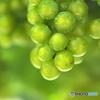 元町の葡萄