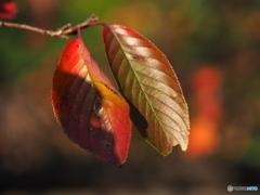 葉っぱの二人