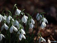 春への道しるべ