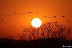 夕陽に吠える