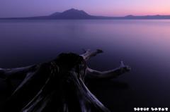 死骨湖 KODAMA 木霊