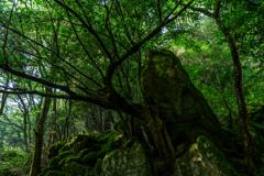 井原山登山道