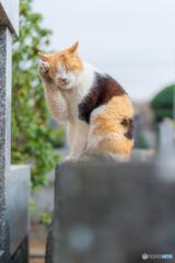 リアルまねき猫