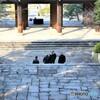 浄土宗総本山 知恩院 2020年2月11日火曜日祝日 京都 お坊さん