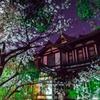夜桜の城址会館
