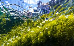 透き通る水