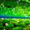 地蔵川の水中風景