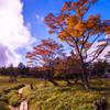 正木ヶ原を歩く
