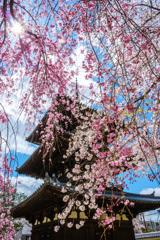 枝垂れの塔