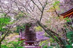 談山神社の春