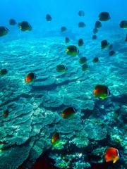テーブルサンゴの海