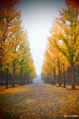 Mist Yellow