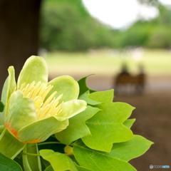 PETAL -Tulip-