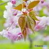 Spring -若葉-
