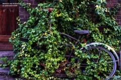 OLD EYE -Green-