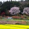 桜と桃と菜の花と