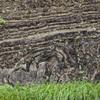 スランプ構造(地滑り跡)