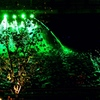 グリーンライト浅草