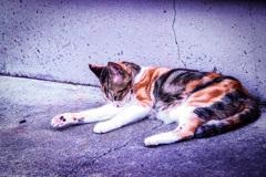 猫のオ・モ・テ・ナ・シ