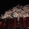 幻の桜の宴 2