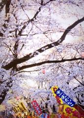 花と幟(のぼり)