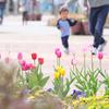 春に駆ける