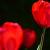 庭の彩り2