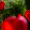 庭の彩り1